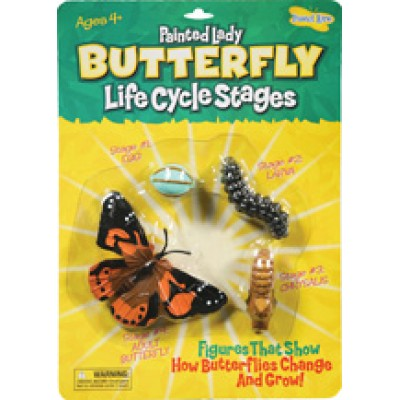 Butterfly - Life Cycle Stages