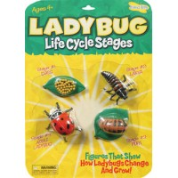 Ladybug - Life Cycle Stages