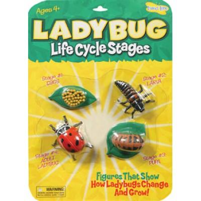Ladybug - Life Cycle Stages